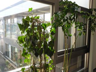 観葉植物を置いています